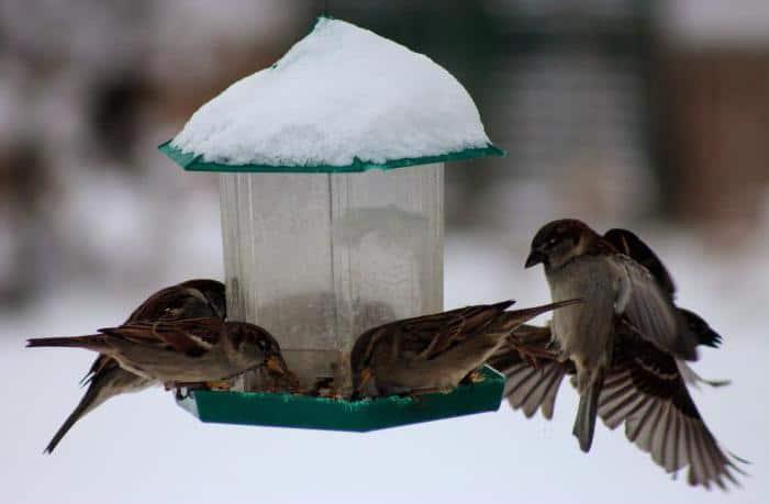 """Сочинение на тему """"Как помочь животным в зимнее время?"""""""