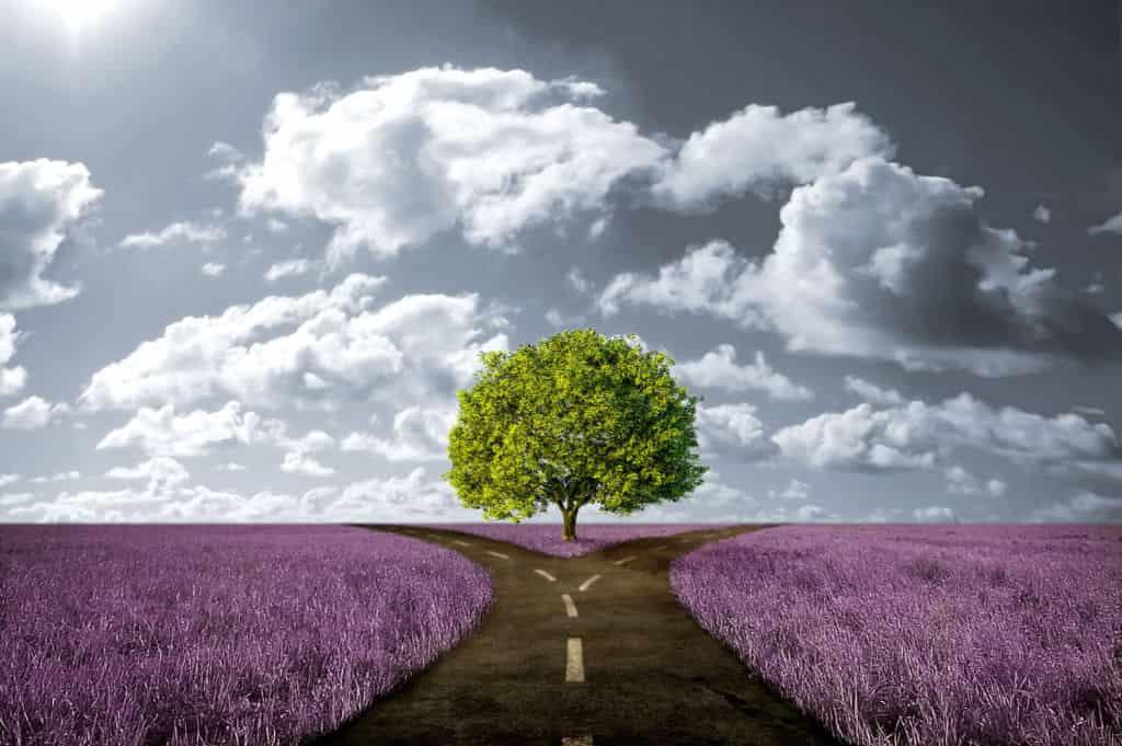 Путь чести и путь бесчестия
