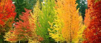 Разная осень
