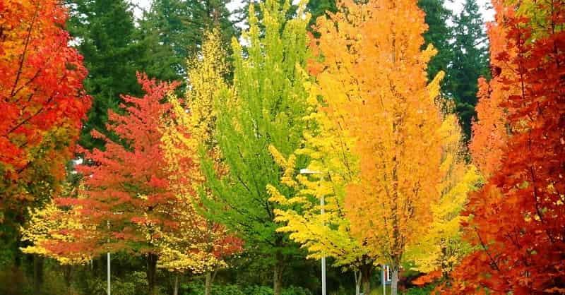 Разная осень - сочинение