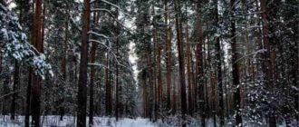 Чудесныйзимний лес