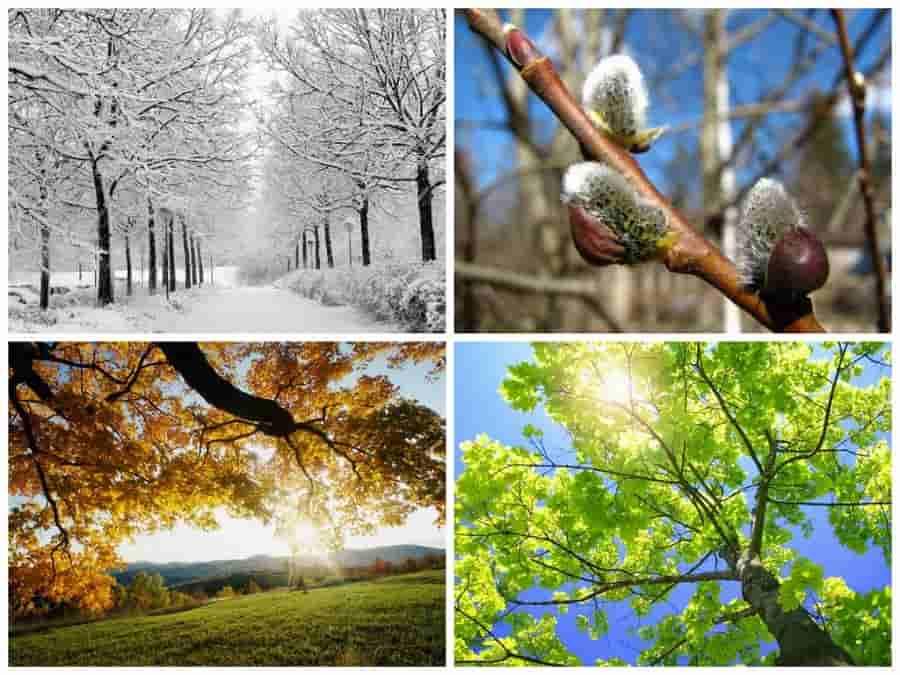 Любимое время года