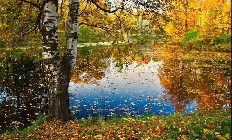 Осенняя пора сочинение