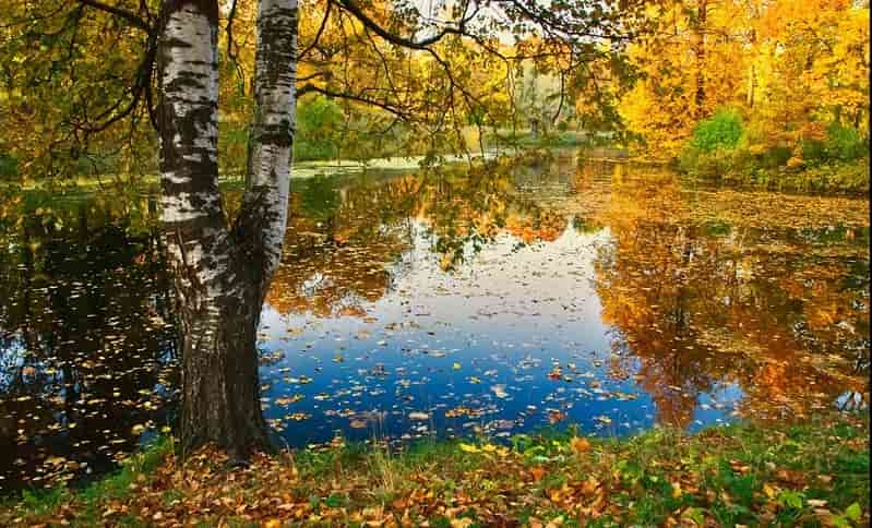 "Сочинение на тему ""Осенняя пора"""