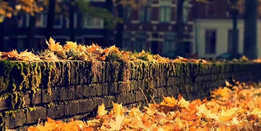Осень в моем городе