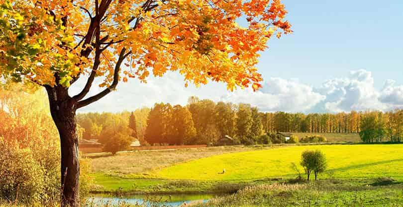 Сочинение про осень