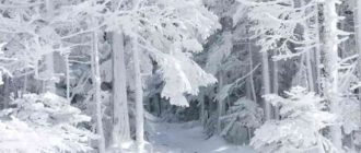 Сочинение про снег