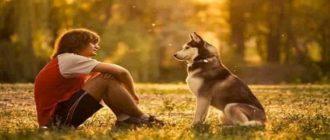 «Собака – друг человека» - сочинение-рассуждение