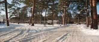 Чудесная жизнь леса зимой