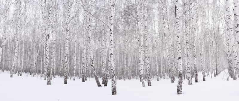 Прогулка на лыжах по зимнему лесу