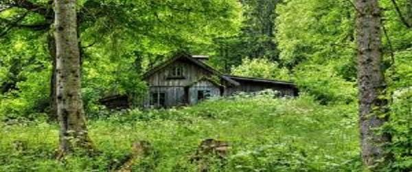 «Что можно делать в лесу