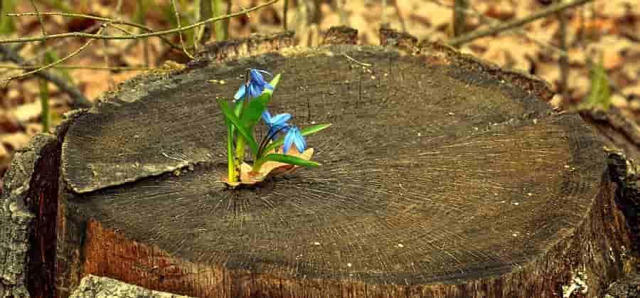 Сочинение про Весну