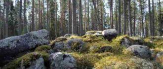 в лесу весной