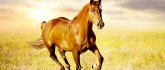 Моё любимое животное - лошадь