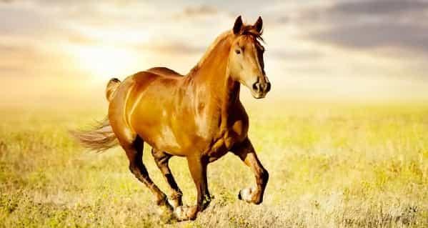 Доклад мое любимое животное лошадь 3247