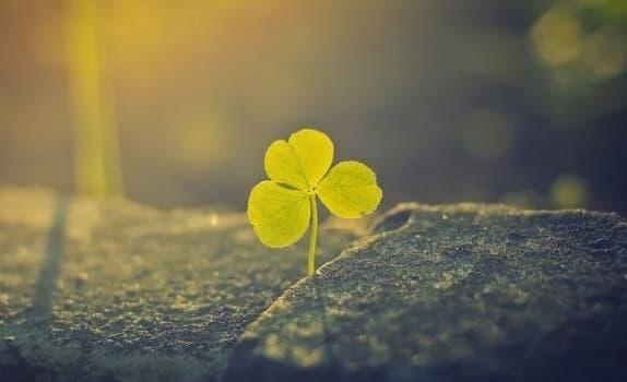 Итоговое сочинение по направлению Надежда и отчаяние